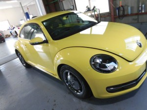 7,9 THE BEETLE COTING (1)